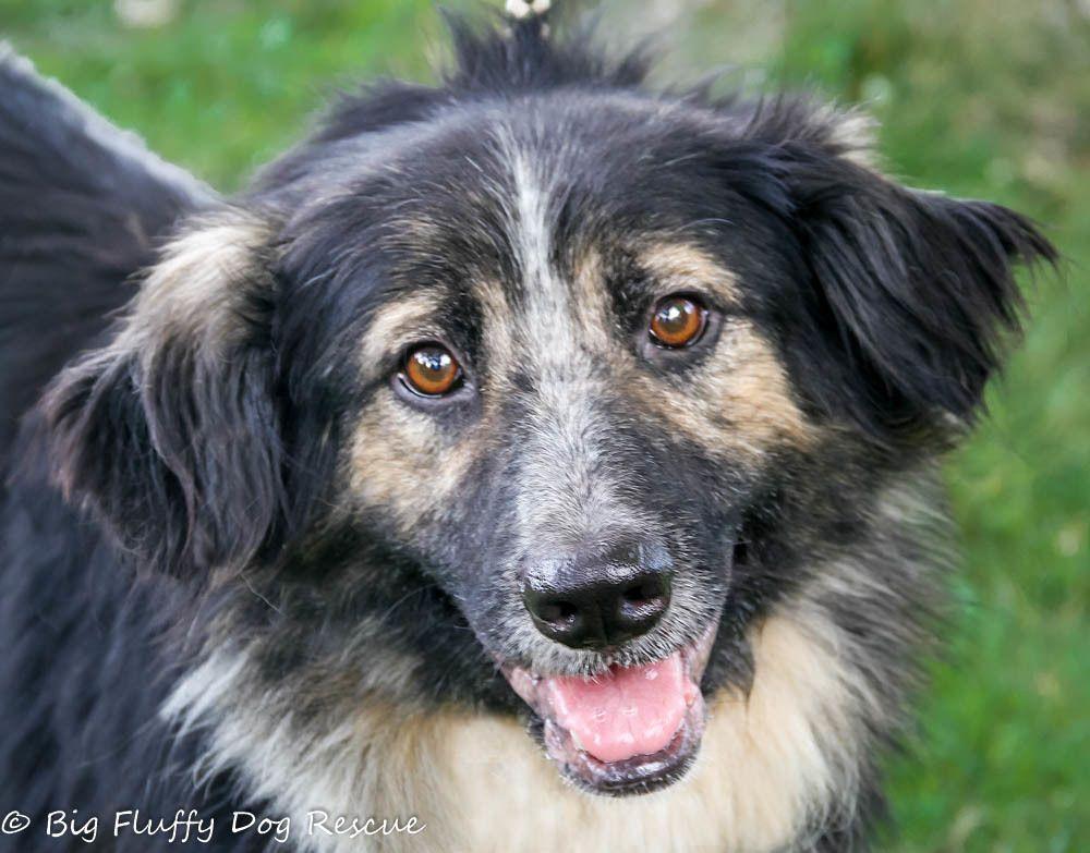 Adopt Fonz On Petfinder Big Fluffy Dog Rescue Big Fluffy Dogs Rescue Dogs