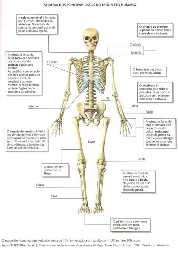 Ossos do corpo humano | ANATOMIA | Pinterest | Anatomía, Medicina y ...