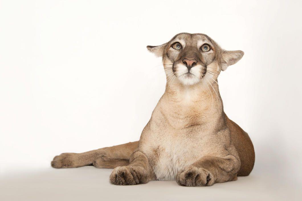 Lucy Cat Autobahn