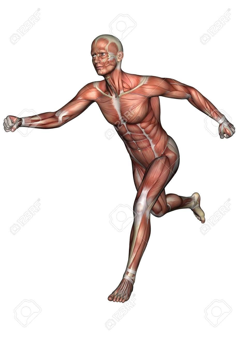 3D digital render of a running male anatomy figure with muscles map ...