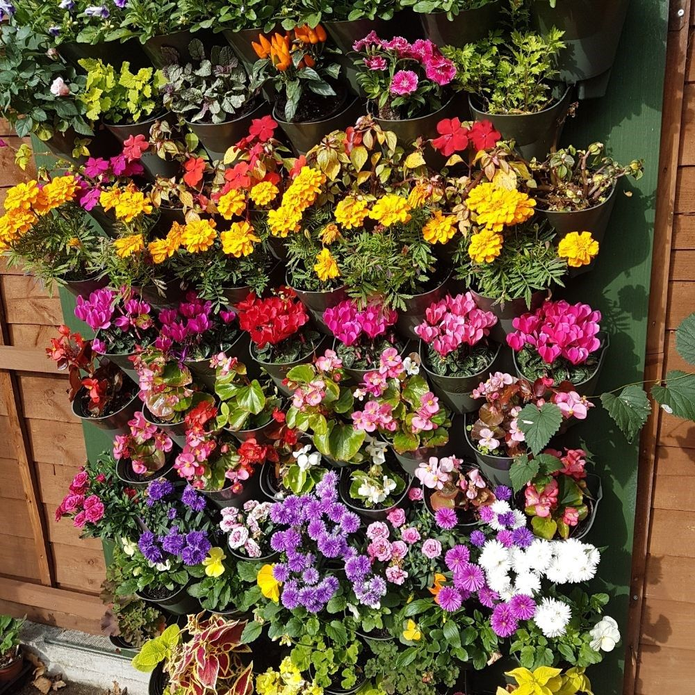 Buy Wonderwall Vertical Planting Starter Kit Delivery By Waitrose Garden In Association With Crocus Vertical Planting Plants Water Plants