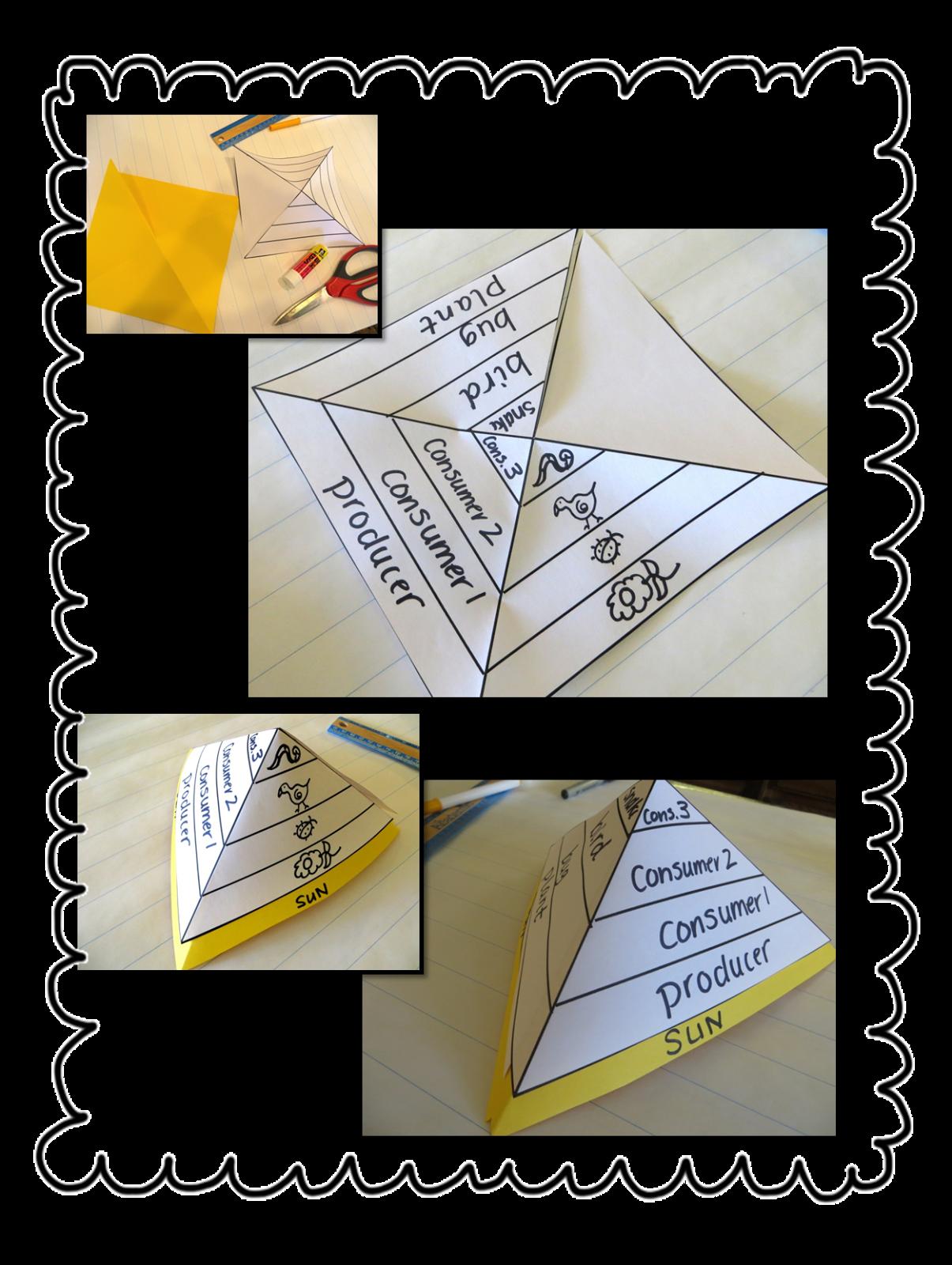 First Grade Wow: Riding the Food Chain! | School stuff | Pinterest ...