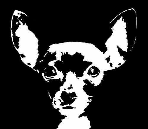 Chihuahua face........