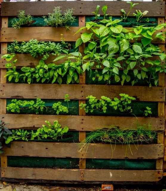 20 Vertical Vegetable Garden Ideas: Vertical Garden DIY_8608