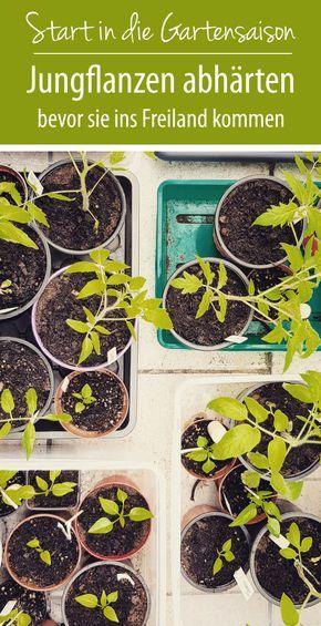 Pflanzen abhärten bevor sie ins Freiland kommen - grüneliebe