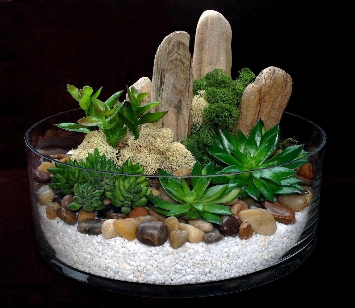 Epingle Par Gfhjugh Sur Plantes Avec Images Plantes Grasses