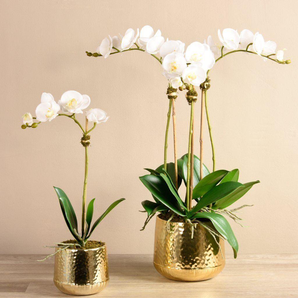 Parisian Orchid Arrangement Orchid arrangements, Orchid