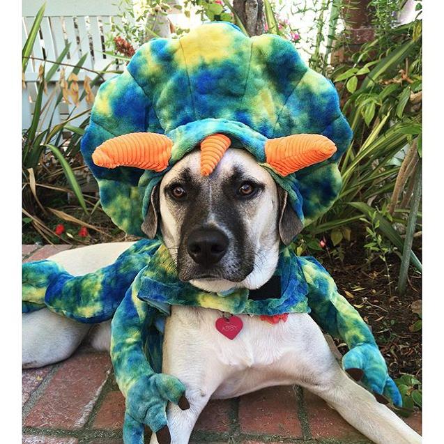 Monster Cute Photo Contest   PetSmart