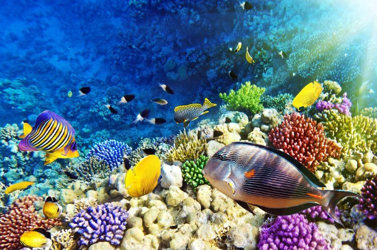 26 صورة ستجعلك ترغب السفر إلى جزر المالديف Underwater Fish Best Snorkeling Ocean Fishing