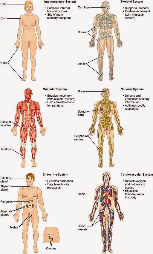 Cuerpo humano: órganos, aparatos y sistemas | Dr.Sanagustín |#Medicina y Psicología http://www.albertosanagustin.com