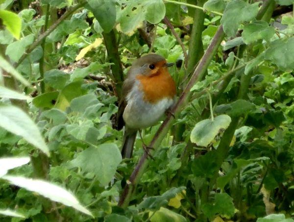 Nicht Nur Im Winter Vogel Richtig Futtern Und Artenvielfalt Fordern