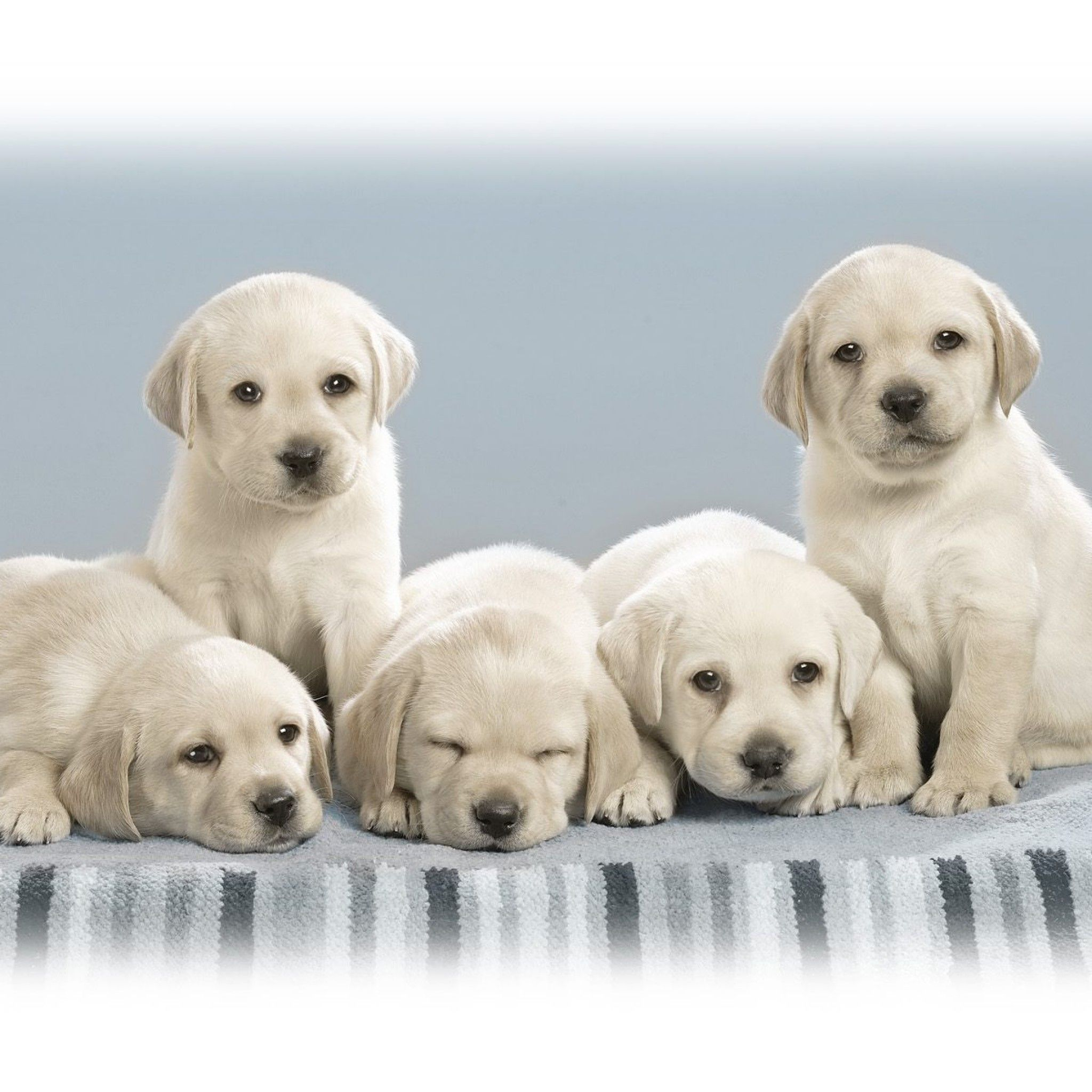 Cute Animals Cute Animals Cute puppies, Cute dog