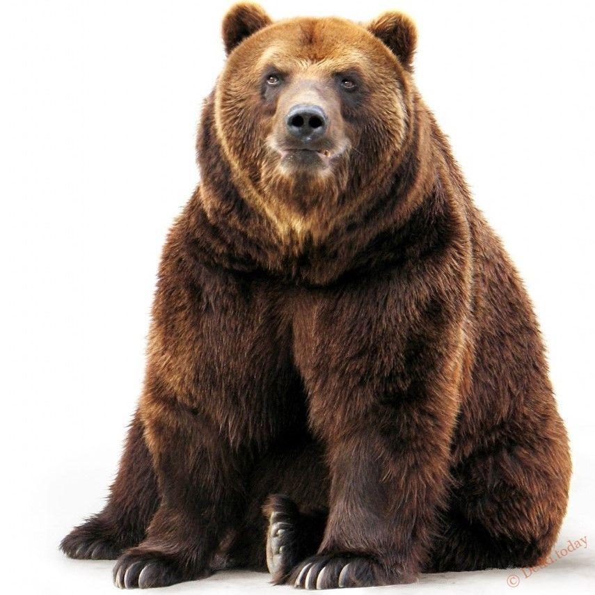 Июля, медведь в картинках для детей
