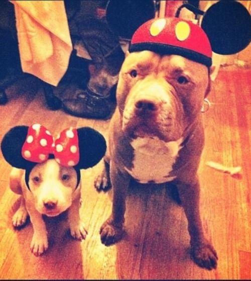 Mickey and Minnie Pitties