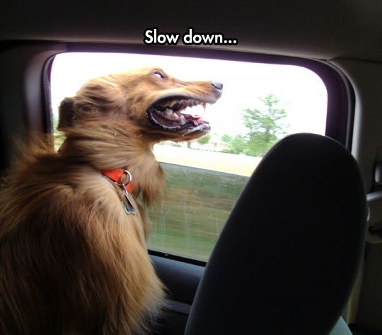 Enjoying The Wind In The Face Funny Dog Pictures Funny Animals