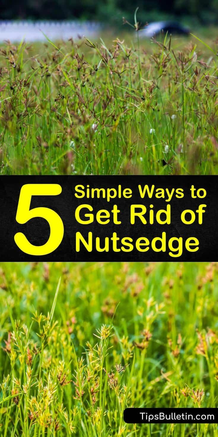 740731eabaeae46f1b647396c6377d0b - How To Get Rid Of Nutsedge In Your Garden
