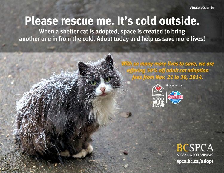 Image Result For Cat Adoption Poster Cat Adoption Cat Shelter Spca