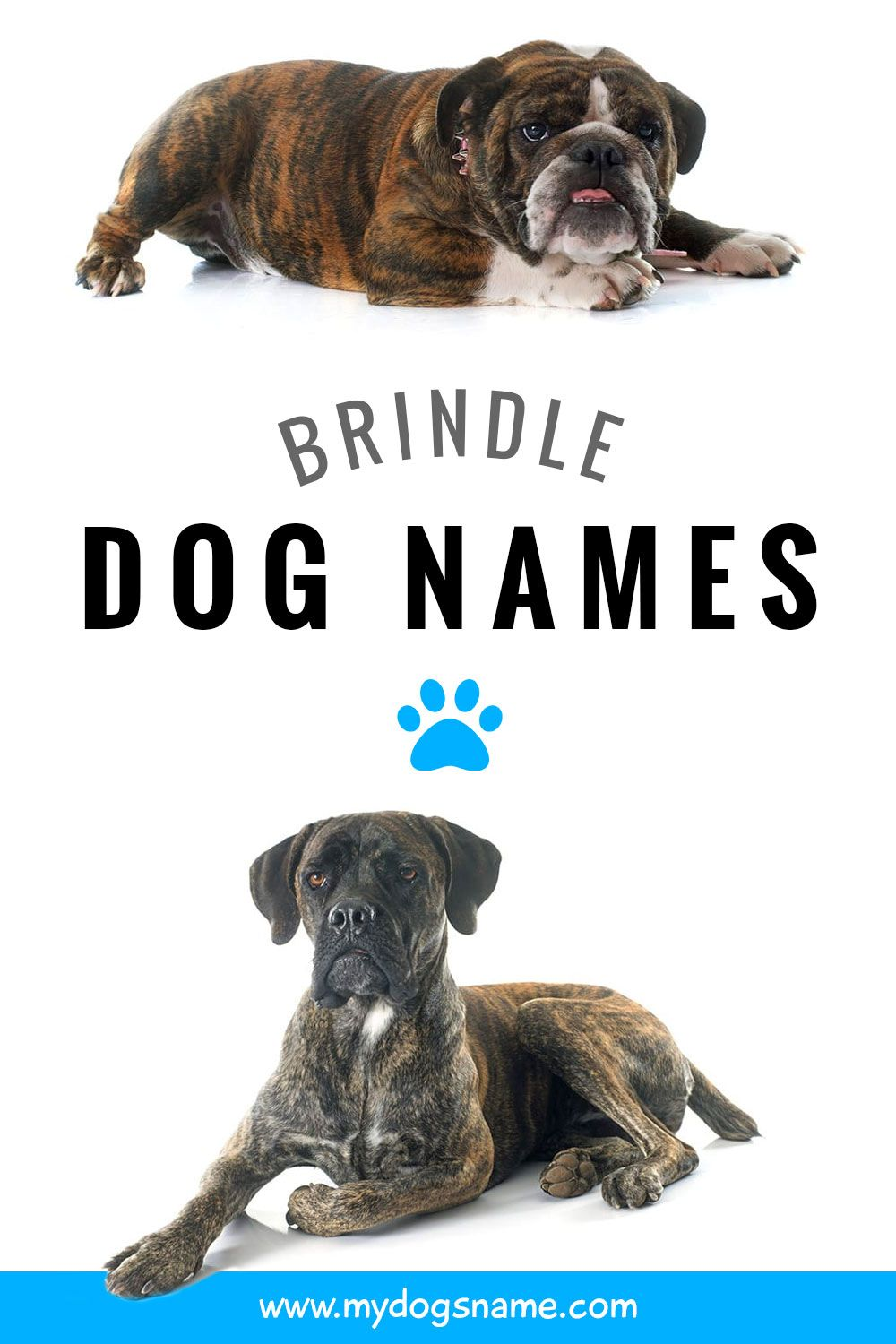 Brindle Dog Names Dog Names Dogs Big Dog Little Dog
