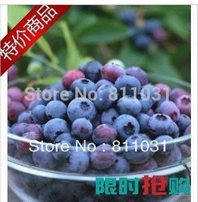 260 un. árbol de fruta de arándano Semillas Plantas Semillas Fruta Semillas Bonsai semillas de frutas