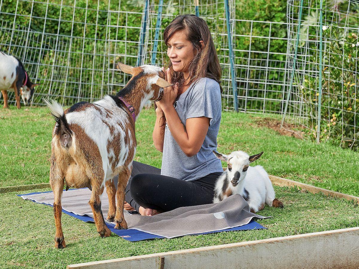 Downward Dog Meets Upright Goat At Maui Goat Yoga With Images Goat Yoga Dog Meet Goats