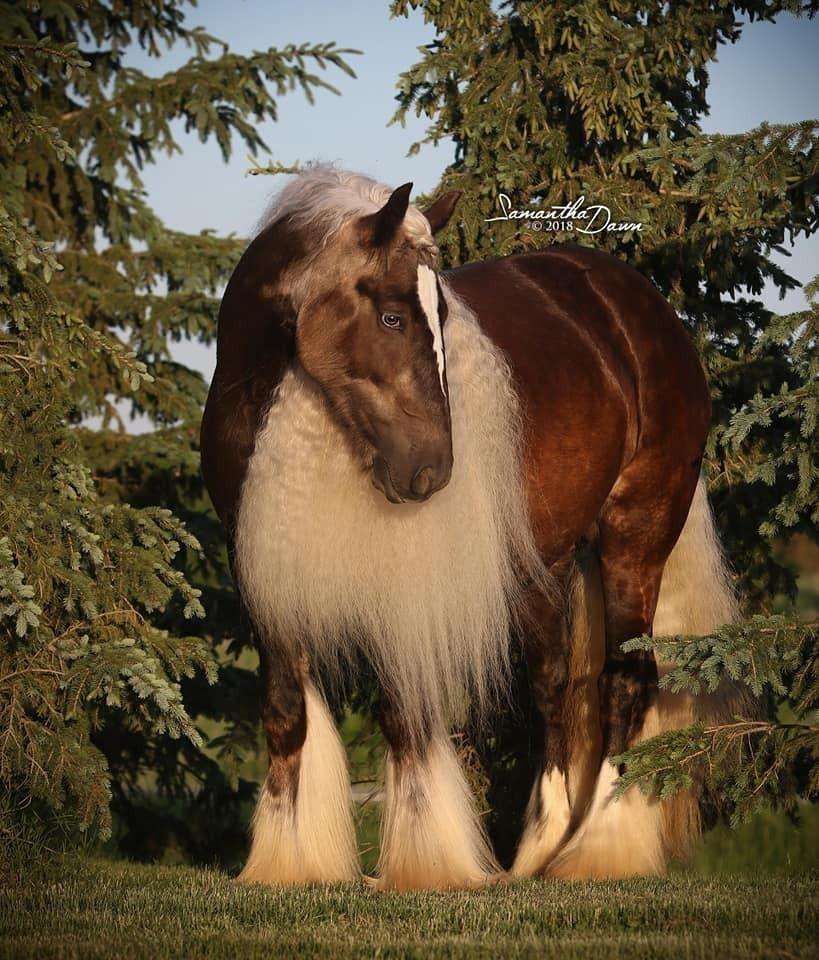 KD Performance Horses | Manes and tails | Horses, Palomino, Animals