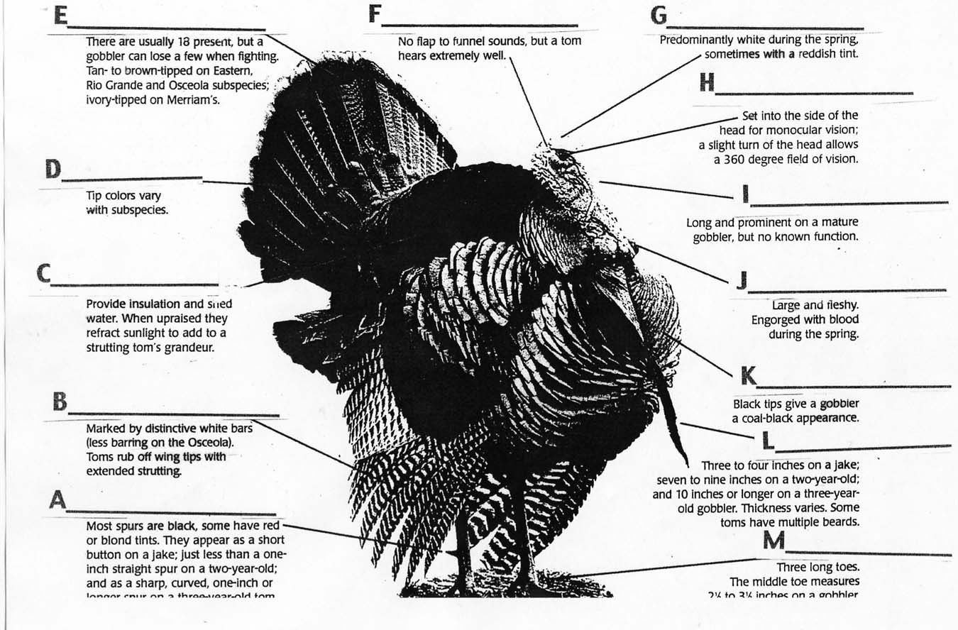 Parts of turkey body | turkey parts quiz static turkey parts answers