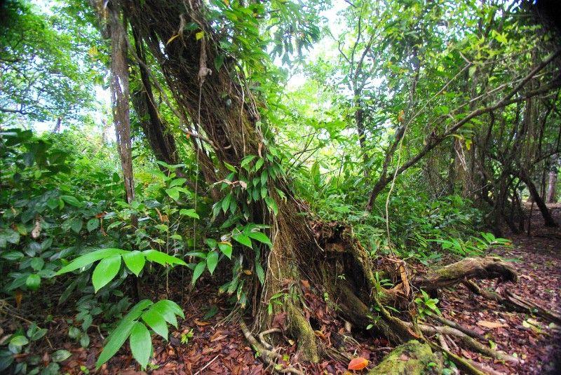 Rainforest frog habitat