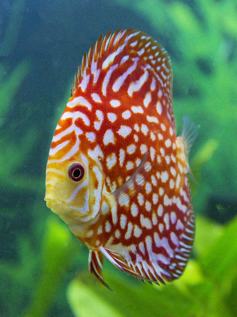 Pin On Discus