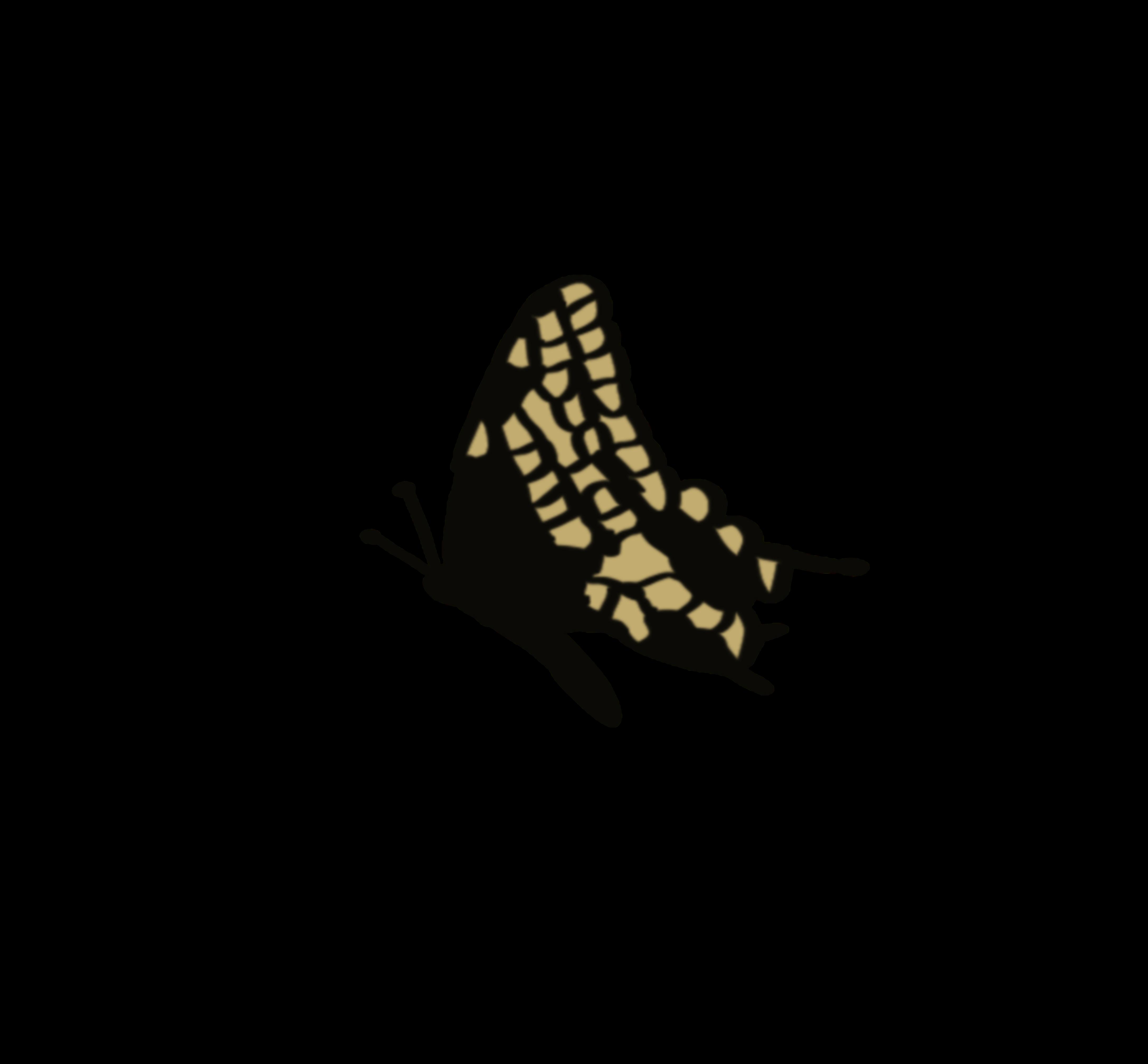 Yellow Black Butterfly Black Butterfly Yellow Butterfly Yellow Black