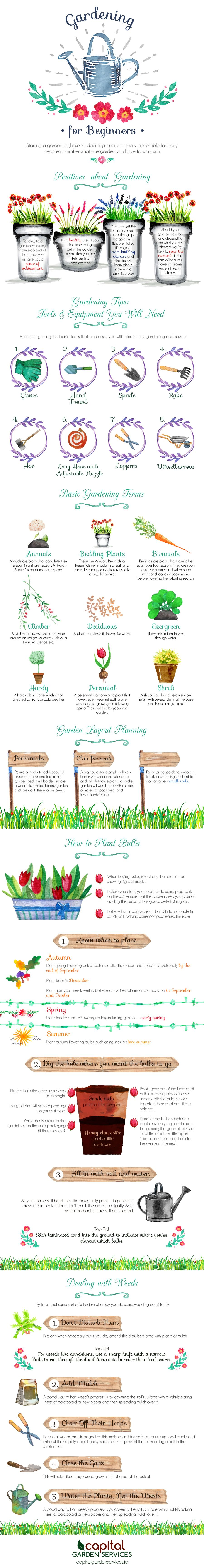 This infographic by Capital Garden Services is designed to help beginners get started in the garden. It contains the basic knowledge of gardening and is a good guide for beginners.