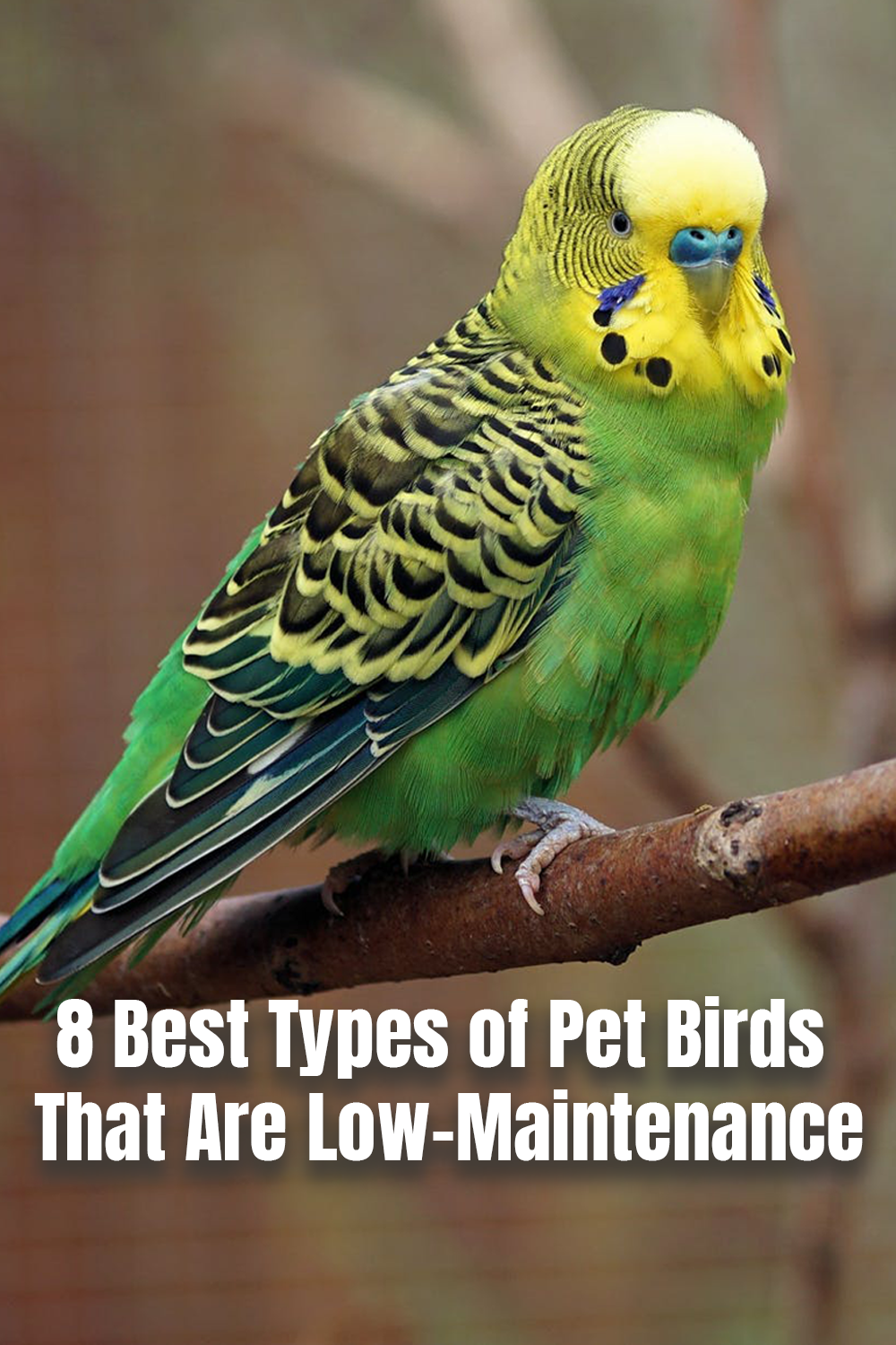 Are you looking for the perfect beginner pet bird? We give