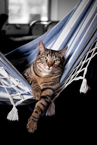 Hangin Around by Raw Optix Photography