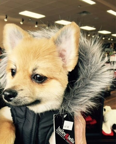 Cutecustomeralert Bear Visited Pet Valu Trexlertown Pa For His Grooming Appointment And Needed A New Coat For All Of This Cold We Pets Animals Cold Weather