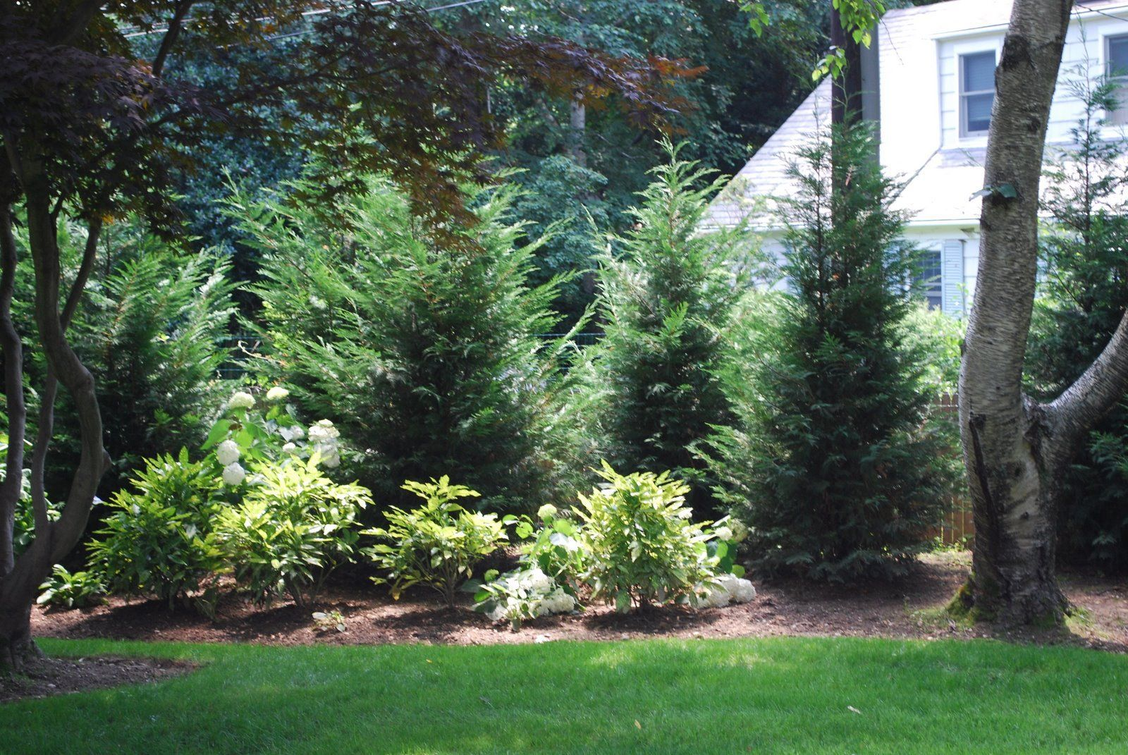 Front Yard - Privacy | Privacy landscaping, Evergreen ...