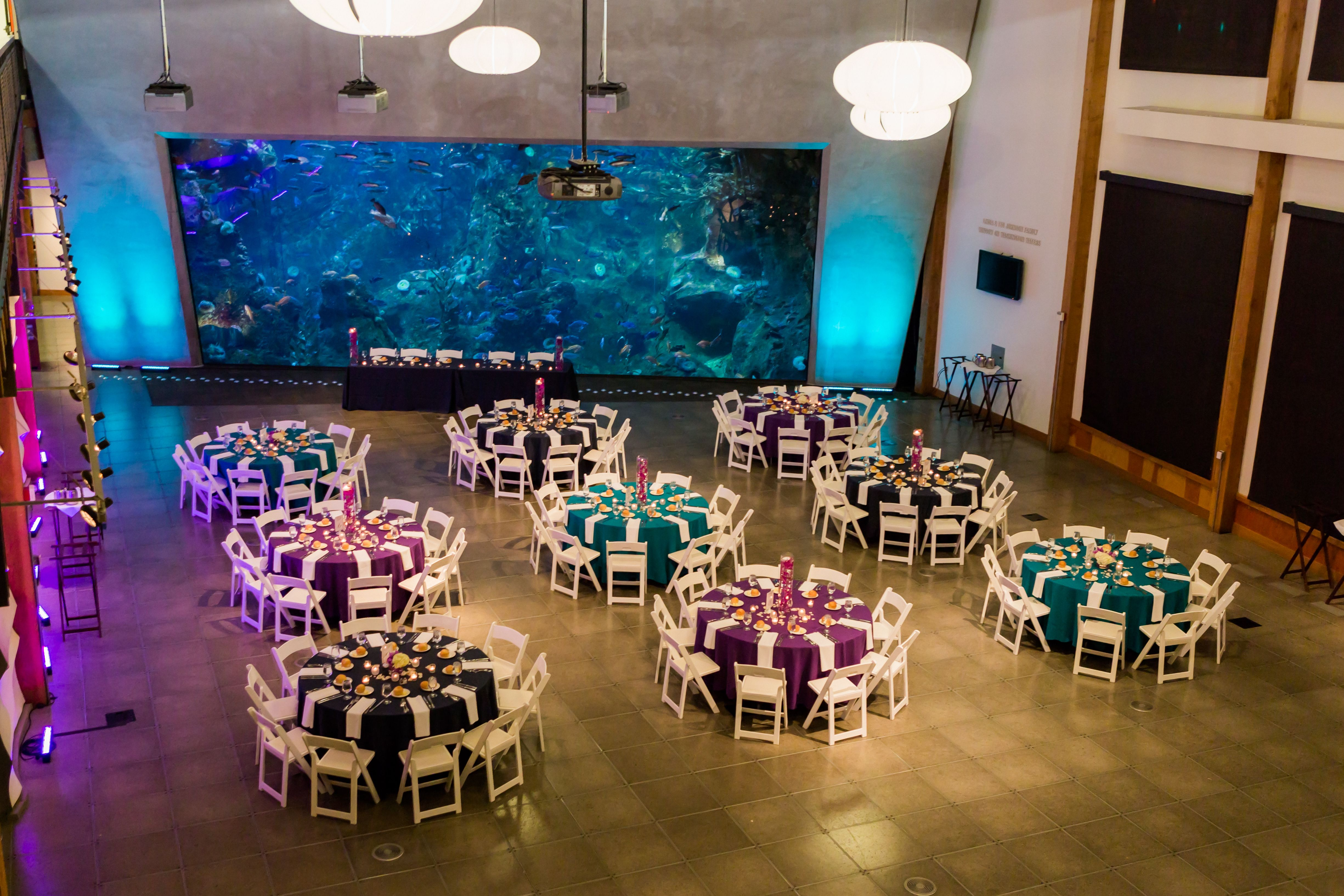 Seattle Aquarium Koordination By Krisanna
