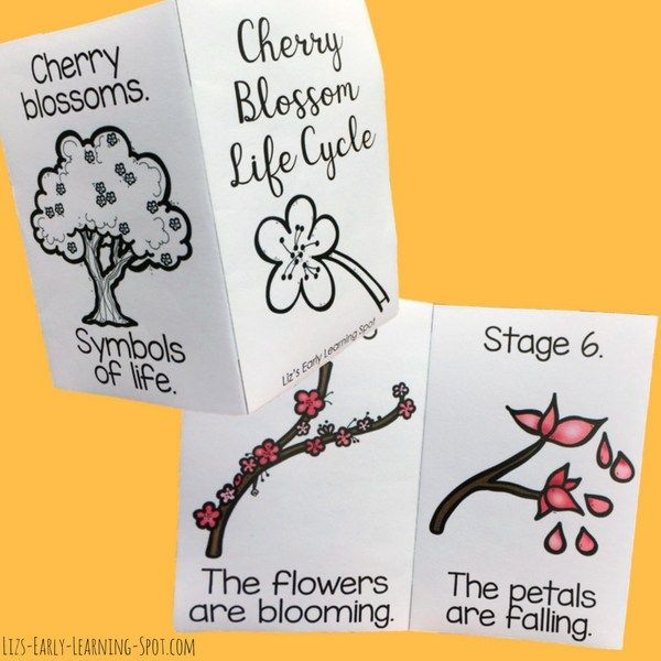 Cherry Blossom Life Cycle And Washington Cherry Blossom Festival Liz S Early Learning Spot Life Cycles Cherry Blossom Cherry Blossom Festival