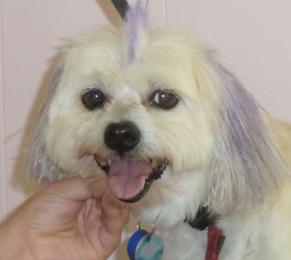 Brighton Dog Groomers Are Top Class Pet Groomers From Brisbane Are