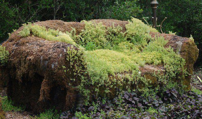 Moss Couch   My Big Backyard   Memphis Botanical Garden