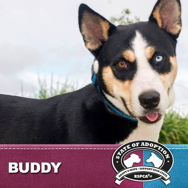 Hi I M Justin Buddy Hodges I M A Lovely Natured Boy Who Walks Well With A Halti Collar Wait For My Food Sit And Shake Hands I M A Ver Adopted Adopt