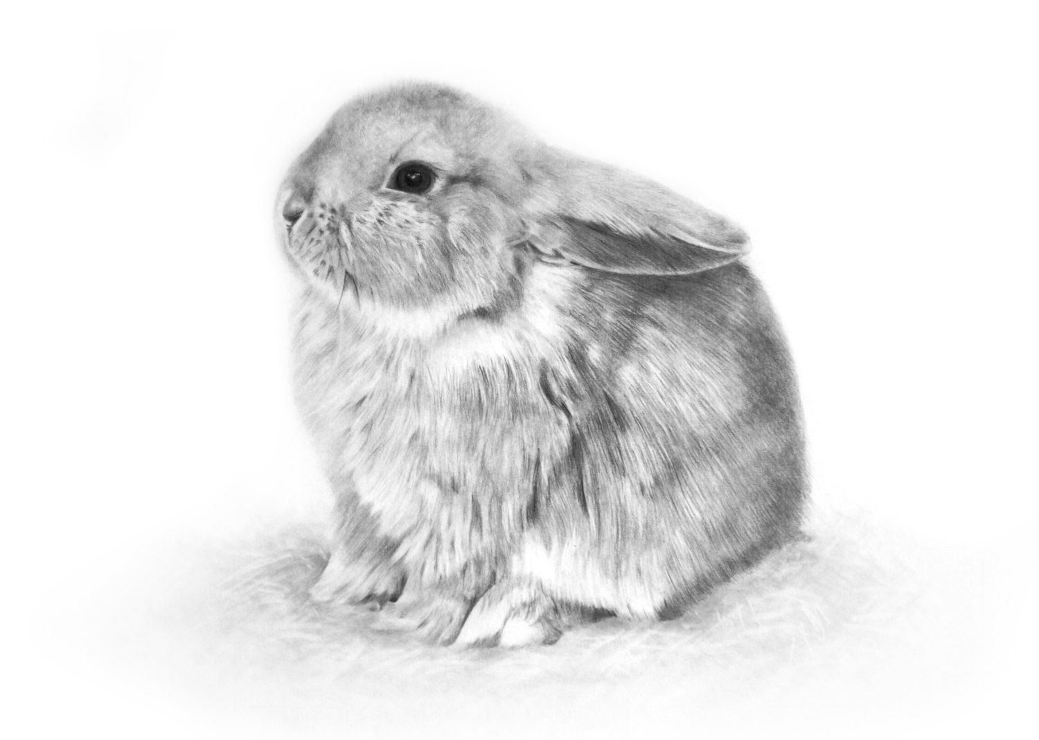 BUNNY signed open edition giclee print, baby rabbit ...