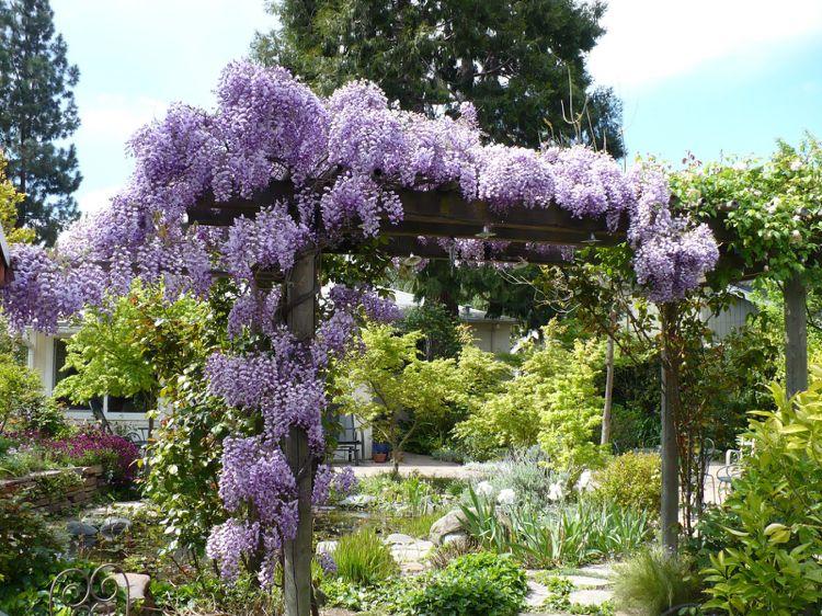 Rankhilfe Blauregen Kletterpflanze Holz Garten Pergola