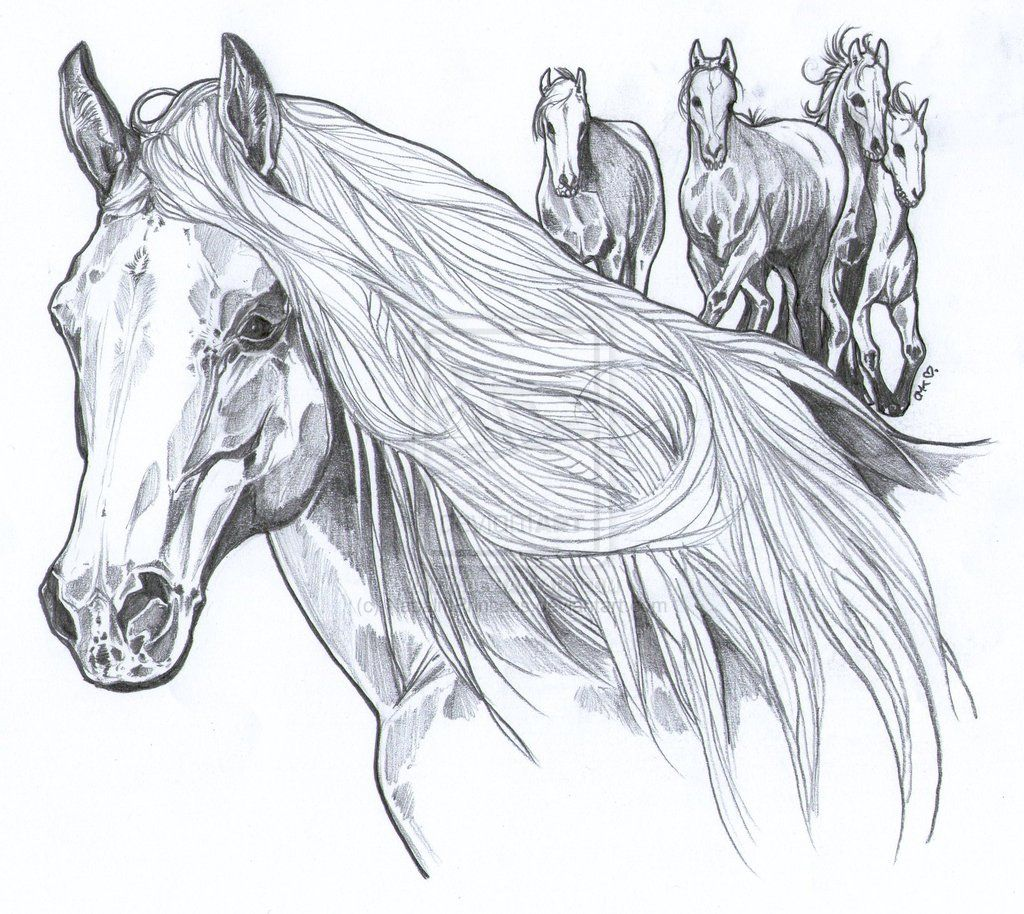 Wild Mustangs Horse Coloring Pages Wild Horses Mustangs Wild Mustangs