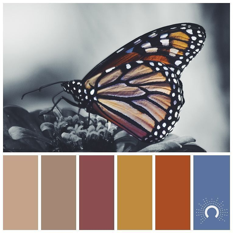 Photoshop Color Inspiration: [ Butterfly ] Inspired By Noah Silliman's #picture
