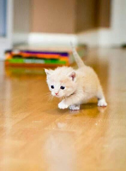 Pin By Ashley Vacek On Kittens Kittens Cutest Cute Animals Baby Cats