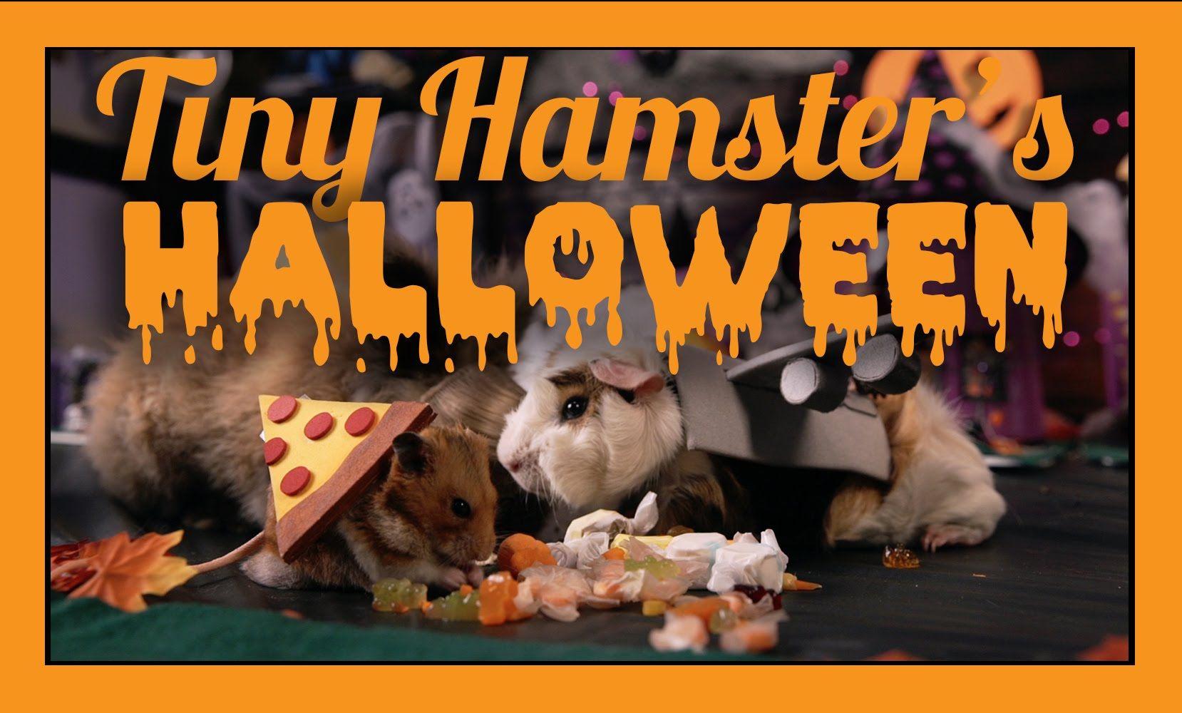 Den kleinen Hamster hatten wir schön öfters hier zu Gast, zum ...