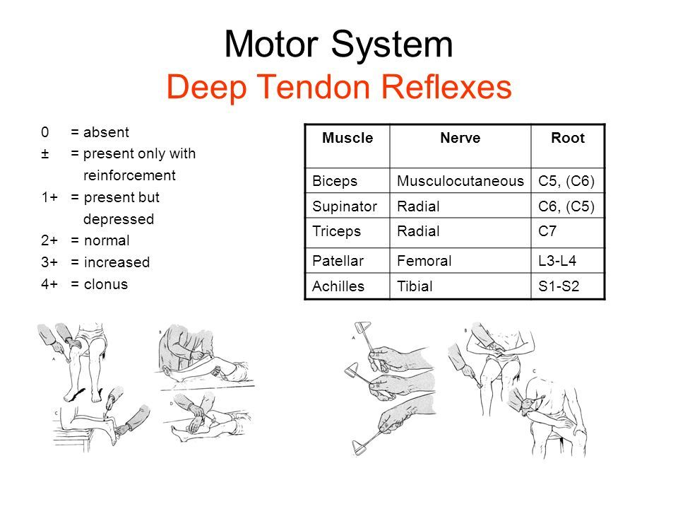 Image Result For Deep Tendon Reflex Chart Fundamentals Of