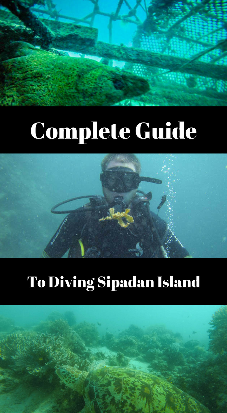 Ultimate Sipadan Diving Guide (Read Before You Go