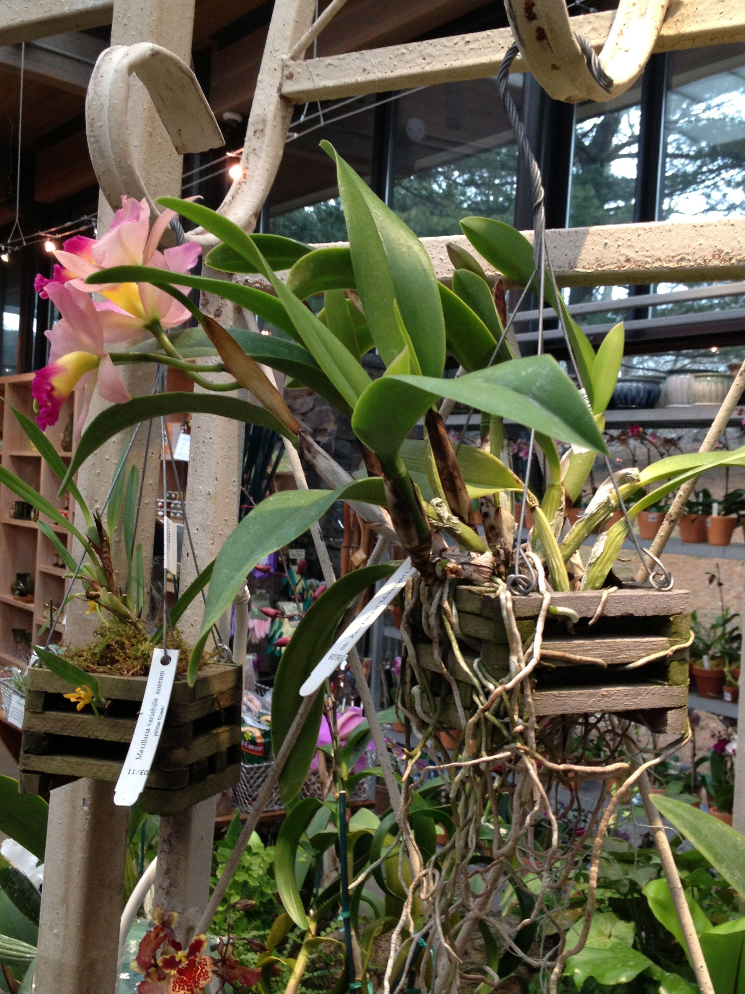 Orchids hanging in cedar baskets at Shop in the Garden   Garden ...