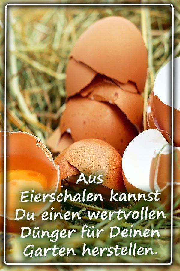 DYI: Dünger aus Eierschalen