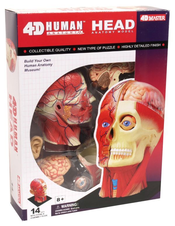 Online Rainbow Resource Center Has 4d Human Anatomy Models Available